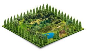 Как оформить землю для родового поместья