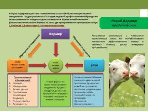 Бизнес план сельское хозяйство пример
