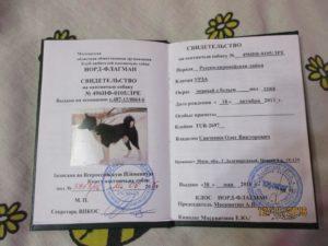 Сколько стоит оформить щенячий паспорт на мопса
